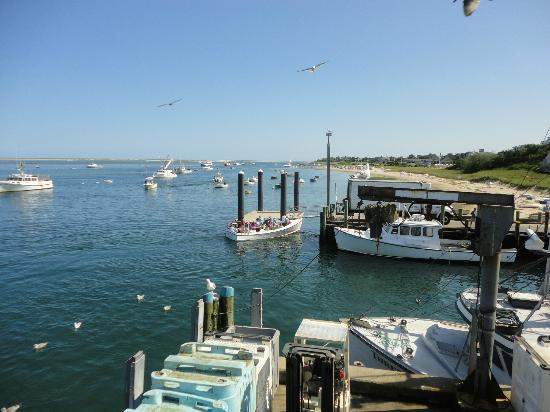 At the chatham pier fish market picture of cape cod for Cape cod fish market