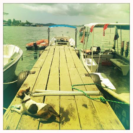 La Buga Dive Center & Surf School: The pier, dive dog and dive boat;)