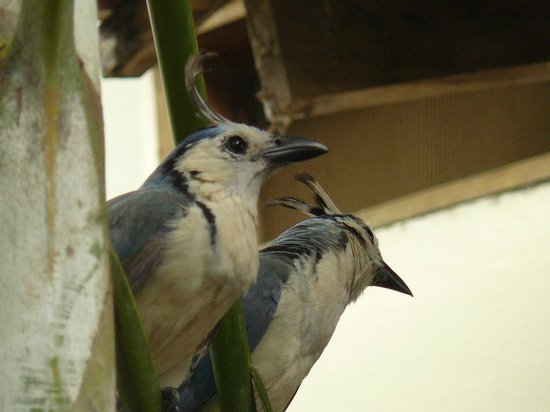 Hotel Mamiri: blue birds