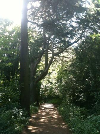 Wepre Park: main path