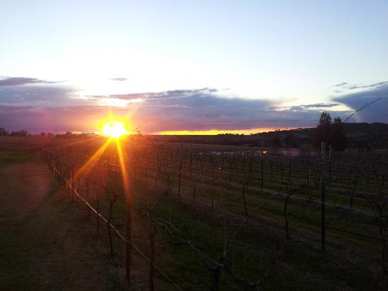 Bluebush Estate: Sunset