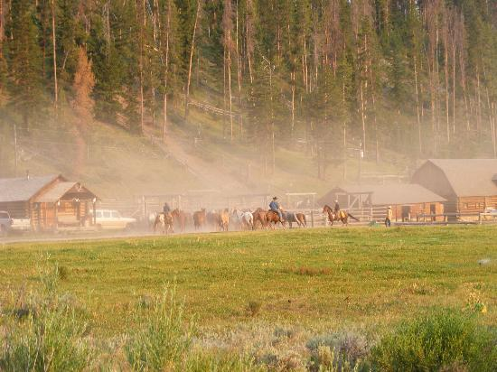 Elkhorn Ranch: Wranglers bringing in the horses in the early morning