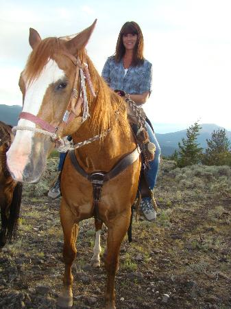 Granite Mountain Outfitters: Trapper the horse