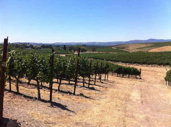 William Hill Estate Winery: Get up close with iPod walking tour of vineyards
