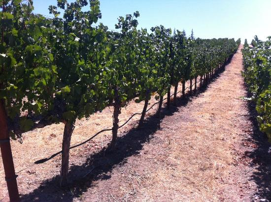 William Hill Estate Winery: Not quite ready for harvest