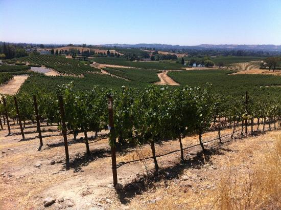 William Hill Estate Winery: More of the vineyard
