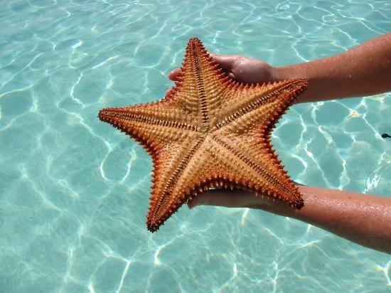 Cape Santa Maria Beach Resort & Villas: starfish
