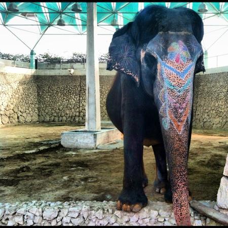 Doha Zoo: Lonley elephant!
