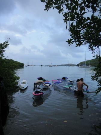 Sea Thru Kayaks VI: Guides prepping the kayaks for bio tour
