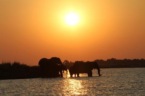 Sanctuary Chobe Chilwero: Love this one