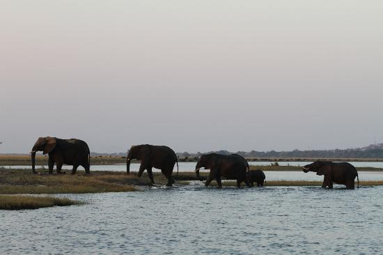 Sanctuary Chobe Chilwero : Amazing