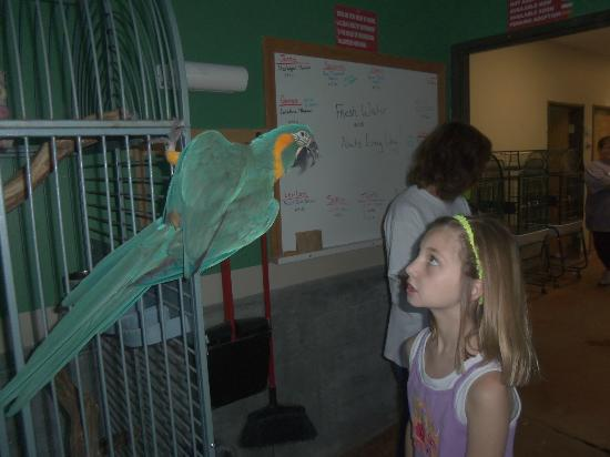 Black Hills Parrot Welfare & Education Center: One of many beautiful rescues Kathleen met!