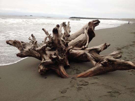Gold Beach Inn: driftwood