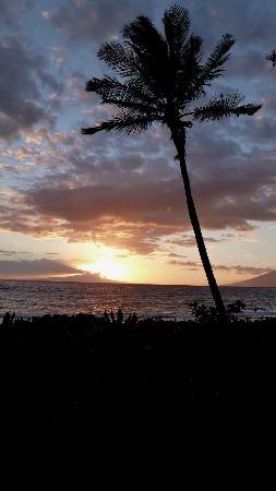 More Wailea Beach Sunset with Picturesque Palm Tree