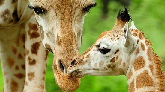 Bronx Zoo : Love