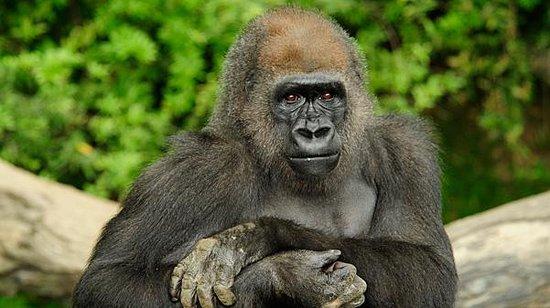 Bronx Zoo : Thoughts