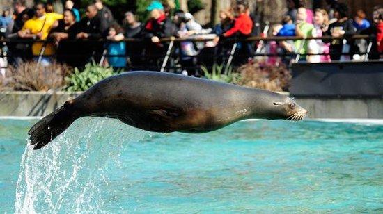 Bronx Zoo : Fun!