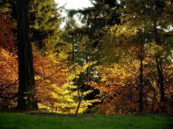 Hoyt Arboretum Foto