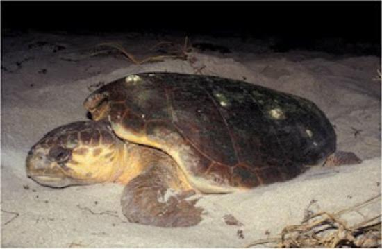 Hawksbill Turtle Preserve