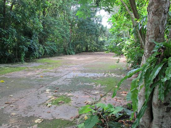WW11 plane wreck in the jungle - Picture of Paradise Tours Santo