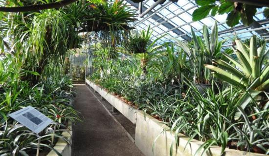 Botanischer Garten der Universität Heidelberg
