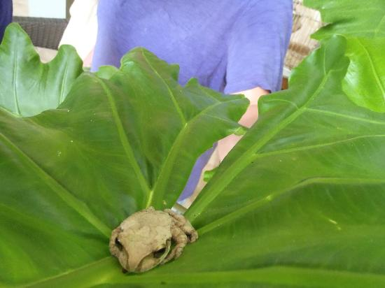 Xbalanque Resort: tree frog