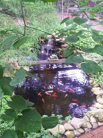 White Birches Inn: Koi Pond in the Back Yard