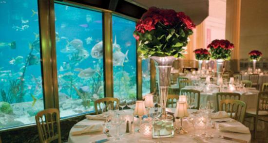 Restaurants Near Shedd Aquarium