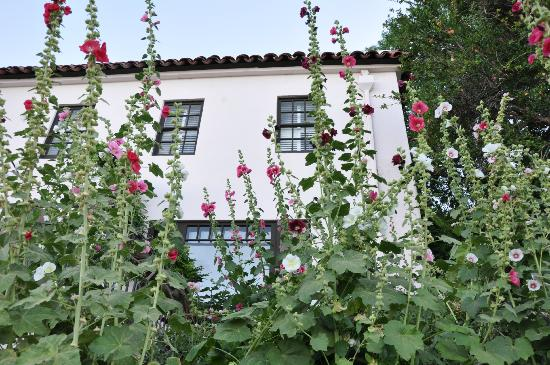 Surgeon's House: A summer of hollyhocks!