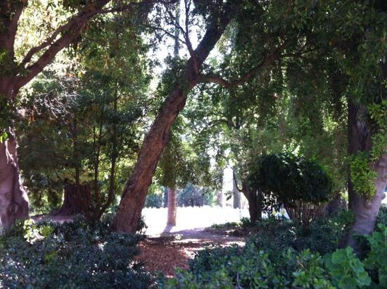 Rancho La Patera & Stow House: lots of trees!