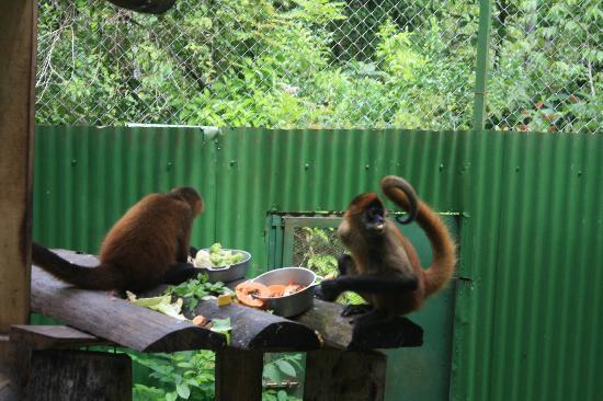 ‪‪Blue Banyan Inn‬: Two of the monkeys at the sanctuary