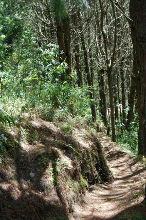 Estancia Dulcelina: Caminito atrás del Hotel para ir a la Cascada
