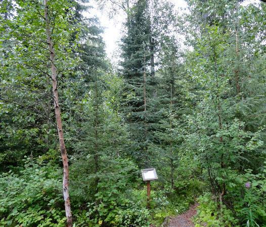 Kenai Riverside Lodge: Nature trail
