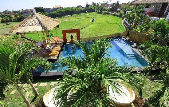 Villa Marene Bali: view from a balcony over pool and rice field