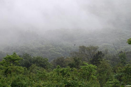 The Machan: View from Forest Machan