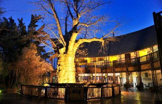 Cresta Mowana Safari Resort and Spa: Baobab Tree