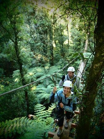 Rotorua Canopy Tours: 12 metre high suspended swingbridge