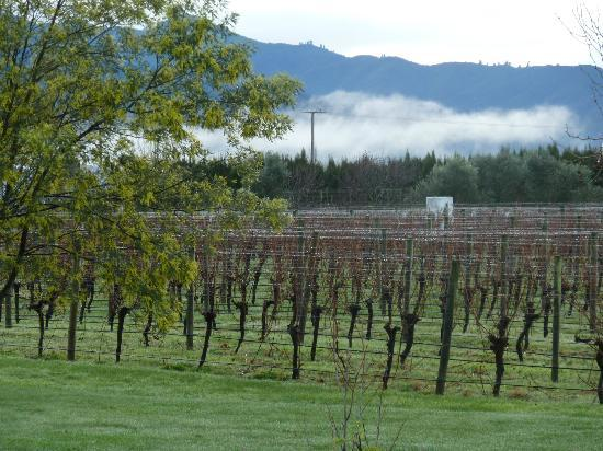 Marlborough Vintners Hotel: View of the vineyards