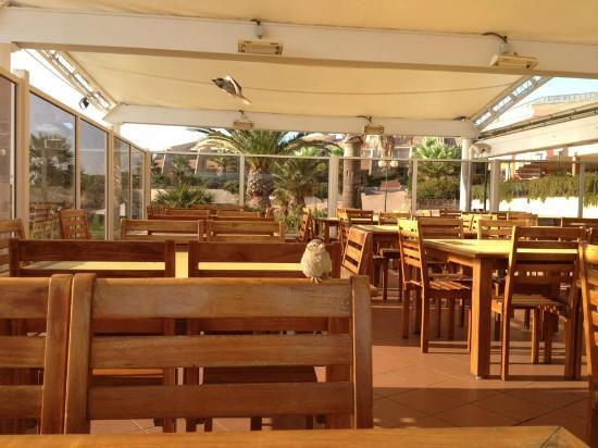 Village Club Cap'vacances des Issambres : salle de restaurant en terrasse