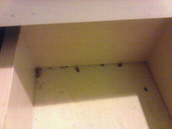 Friendship Hotel: dead roaches in bathroom drawer over 3 months