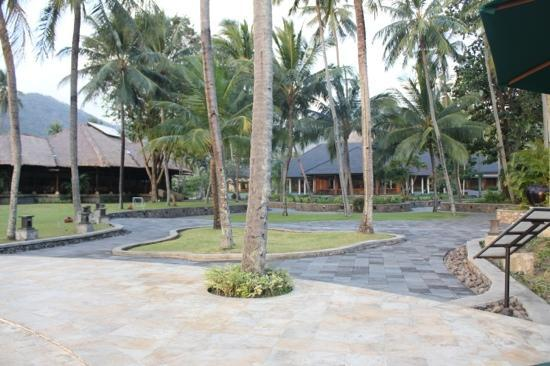 The Santosa Villas & Resort: coconut tree surrounding