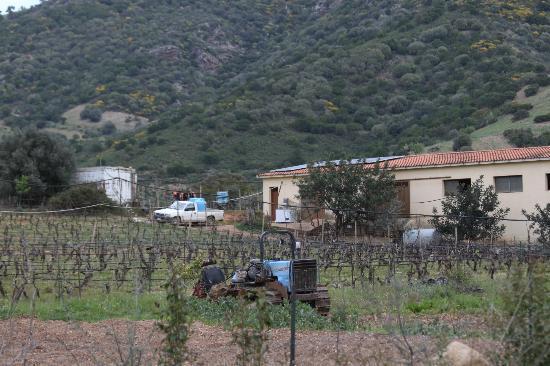 Tertenia, Italien: vista azienda agricola