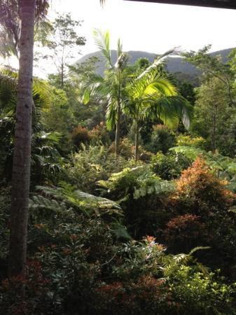 Crystal Creek Rainforest Retreat: Our view from our cabin