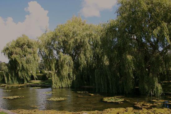 Godinton House & Gardens: lake.