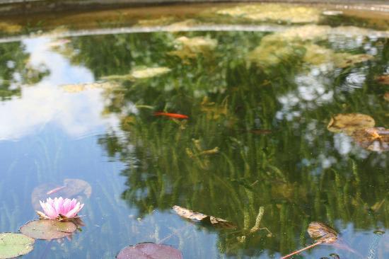 Godinton House & Gardens: pond