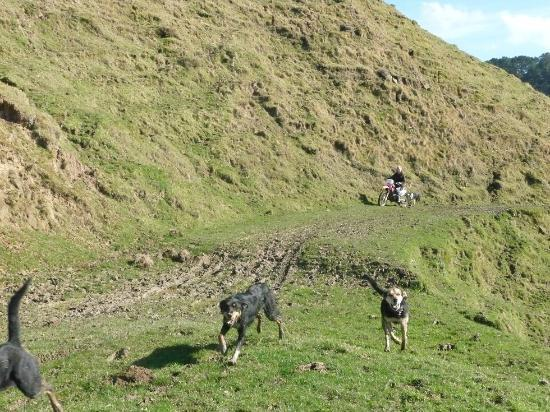 The Quarters: Mahia View Walk - The Host & dogs