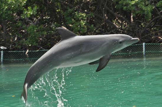 Rosewood Little Dix Bay: Dolphin Discovery over at Tortola