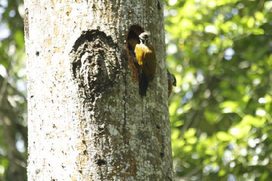 Shola Periyar Tree House: normal sighting of bird ,near the tree house
