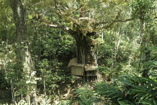 Shola Periyar Tree House: oute view