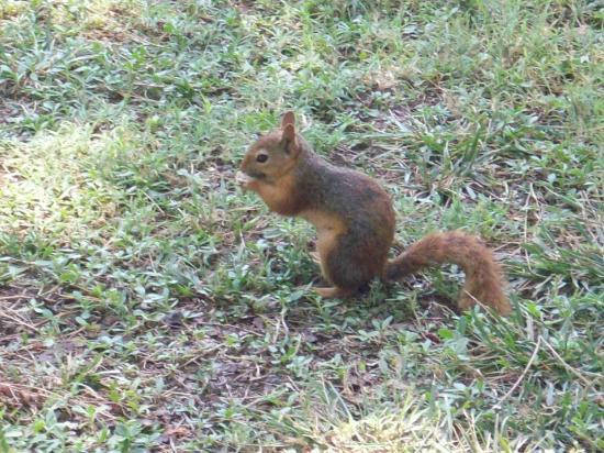 Kustur Club Holiday Village: écureuil près de la réception
